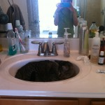 Kitty in a sink!